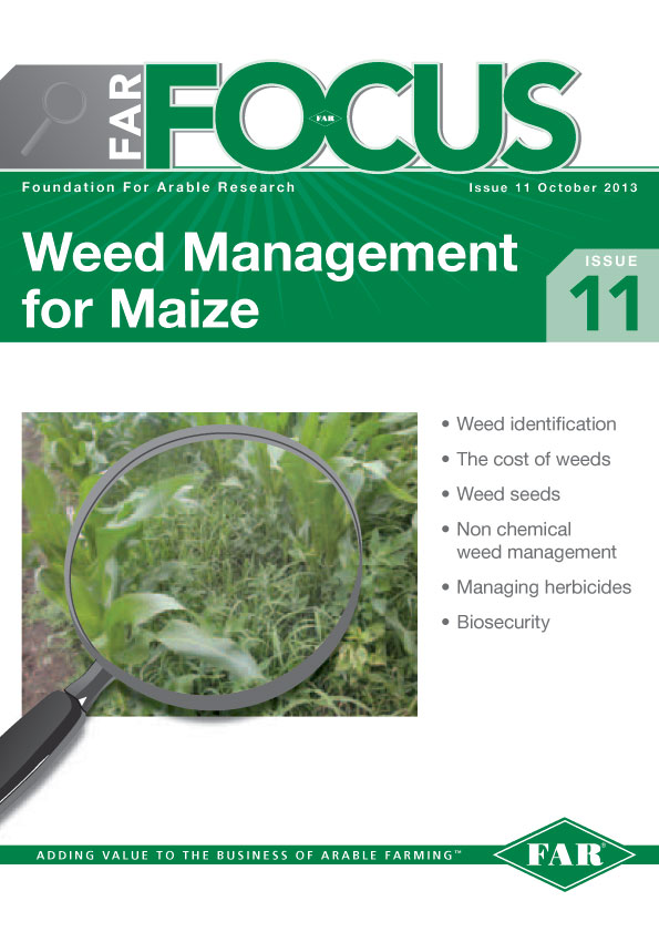 Weeds in maize cover